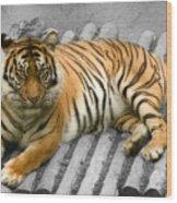 Tigers Look Wood Print
