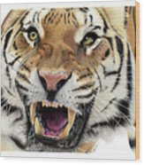 Tigers Pace Wood Print