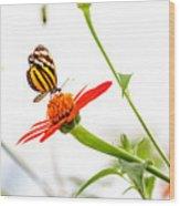 tigerwing at plus 1EV Wood Print