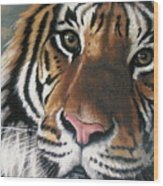 Tigger Wood Print by Barbara Keith