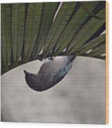Tightrope Walker Bird Wood Print