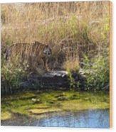 Tigress By The Stream Wood Print