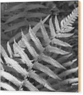 Tilted Fern Wood Print