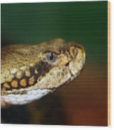 Timber Rattler Head On Wood Print