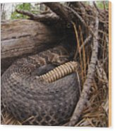 Timber Rattlesnake Wood Print