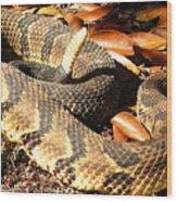 Timber Rattlesnake Horizontal Wood Print