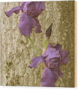 Timeless Iris  Wood Print