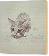 Tinkbott Wood Print