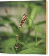 Tiny Bee On Wildflower Wood Print