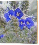 Tiny Blue Floral Wood Print