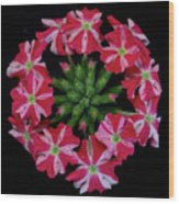 Tiny Bunch Of Red And Pink Flowers Wood Print