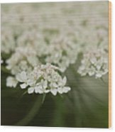 Tiny Cluster Of Queen Anne's Lace Wood Print