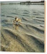 Tiny Crab In Water Wood Print
