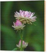 Tiny Dahlias Green Aura Wood Print