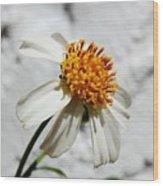 Tiny Flower  Wood Print