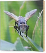 Tiny Fly Wood Print
