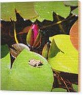 Tiny Frog Wood Print