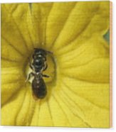 Tiny Insect Working In A Cucumber Flower Wood Print