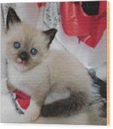 Tiny Micro Version Of Red White And Ragdoll Kitty Kitten Baby Cat Silktapestrykittenstm Wood Print