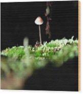 Tiny Mushroom 1 Wood Print