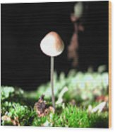 Tiny Mushroom 2 Wood Print