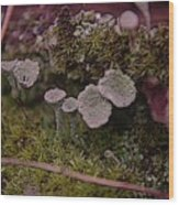 Tiny Mushrooms  Wood Print