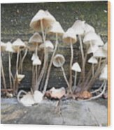 Tiny Mushrooms On The Step Wood Print by Carrie Viscome Skinner