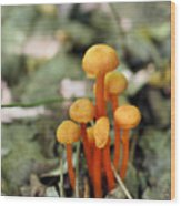 Tiny Orange Mushrooms Wood Print