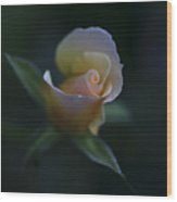 Tiny Pink Rosebud Wood Print