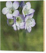 Tiny Purple And Blue Wood Print