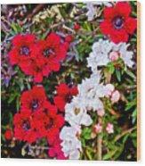 Burgundy Queen Bush At Pilgrim Place In Claremont-california Wood Print