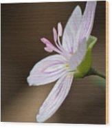 Tiny Spring Beauty Wood Print