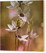 Tiny Spring Blooms Wood Print