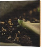 Tiny Succulent Wood Print