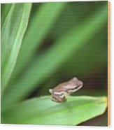 Tiny Tree Frog 01110 Wood Print