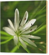 Tiny White Flower Wood Print