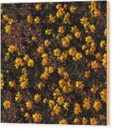 Tiny Yellow Flowrers On The Desert Floor Wood Print