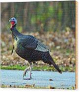 Tiptoe Turkey Trot Wood Print