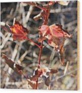 Tired Leaves Wood Print