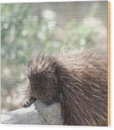 Tired Porcupine On A Fallen Log Wood Print