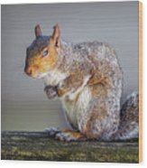 Tired Squirrel And Fly Wood Print