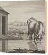 Title A Cow Standing In A Pool Beside  Wood Print