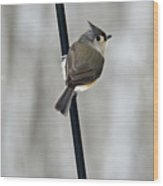 Titmouse In A Snowstorm Wood Print
