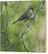Titmouse In The Brush Wood Print