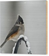 Titmouse In The Snow Wood Print
