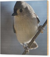 Titmouse Pause Wood Print