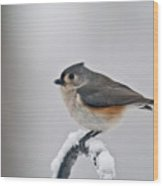 Titmouse Ready To Fly Wood Print