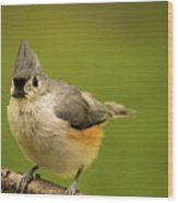 Titmouse Ready To Jump And Fly Wood Print