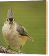 Titmouse Says Here Is Looking At You Wood Print