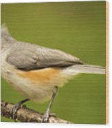 Titmouse With Bad Hairdo 3 Wood Print